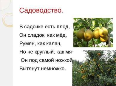Садоводство. В садочке есть плод, Он сладок, как мёд, Румян, как калач, Но не...