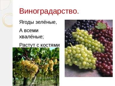 Виноградарство. Ягоды зелёные, А всеми хвалёные; Растут с костями Висят кистями.