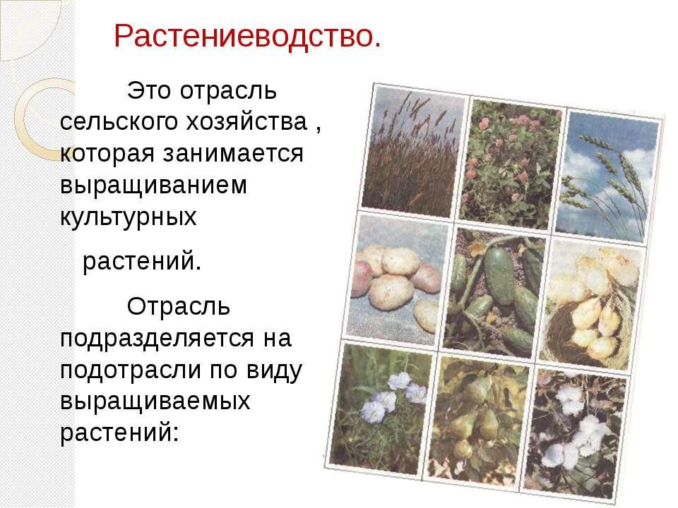 Растениеводство. Это отрасль сельского хозяйства , которая занимается выращив...