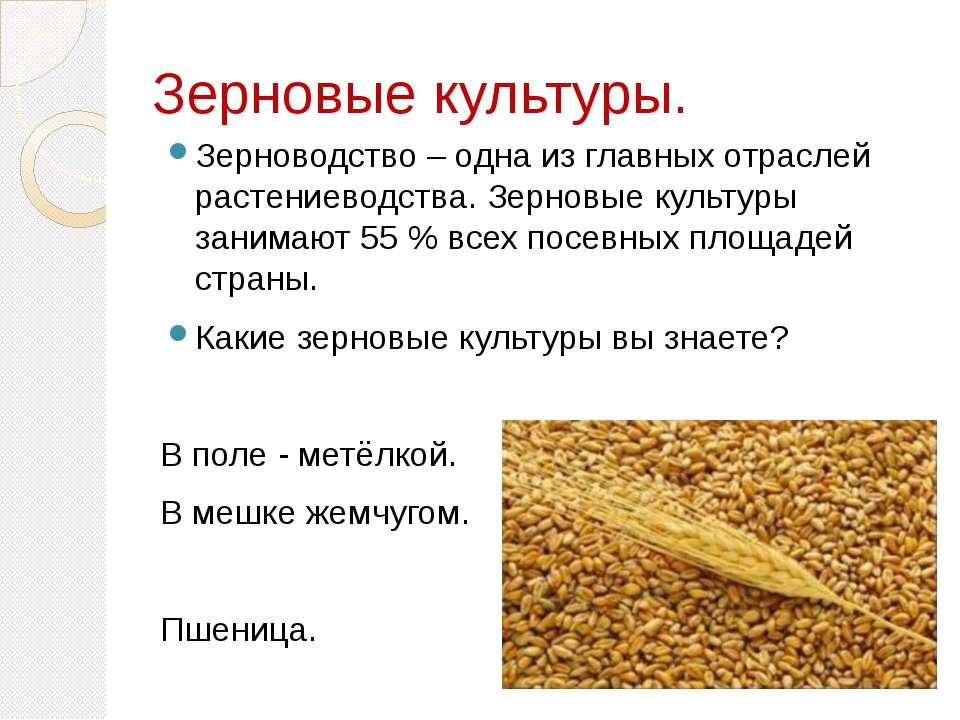 Зерновые культуры. Зерноводство – одна из главных отраслей растениеводства. З...