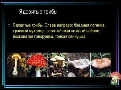 Ядовитые грибы Ядовитые грибы. Слева направо: бледная поганка, красный мухомо...