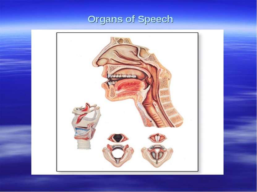 Organs of Speech работ