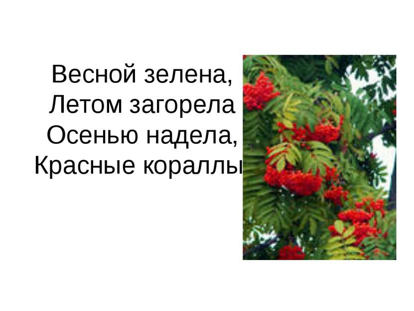 Весной зелена, Летом загорела Осенью надела, Красные кораллы.