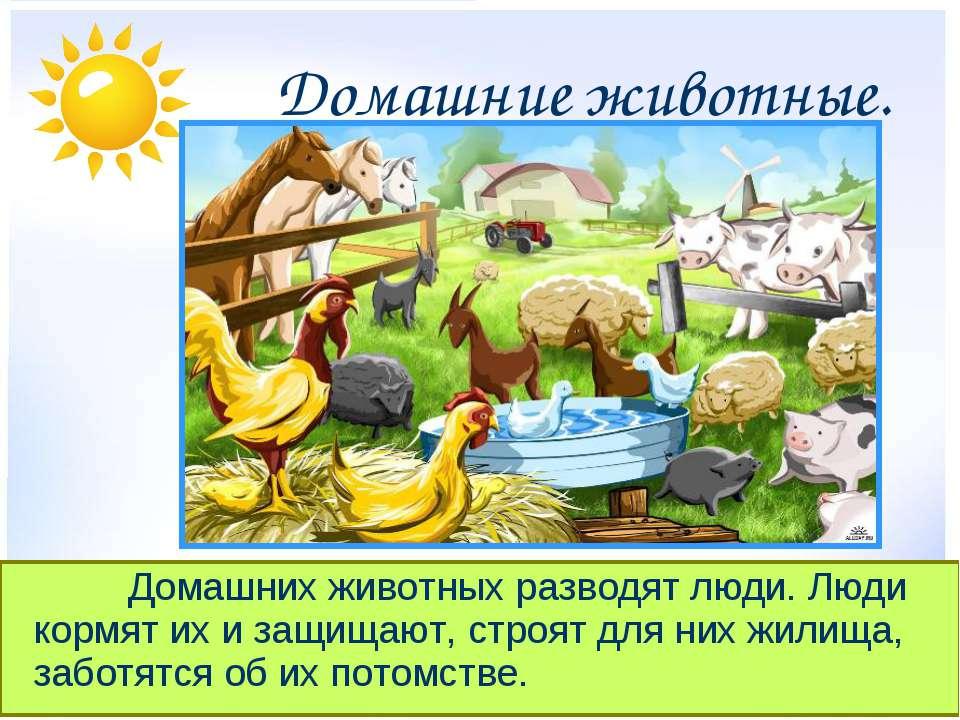 Домашние животные. Домашних животных разводят люди. Люди кормят их и защищают...