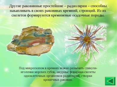 Другие раковинные простейшие – радиолярии – способны накапливать в своих рако...