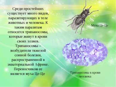 Среди простейших существует много видов, паразитирующих в теле животных и чел...