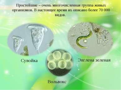 Простейшие – очень многочисленная группа живых организмов. В настоящее время ...
