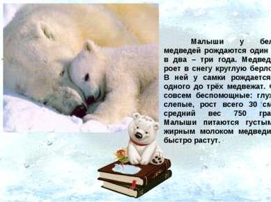 Малыши у белых медведей рождаются один раз в два – три года. Медведица роет в...