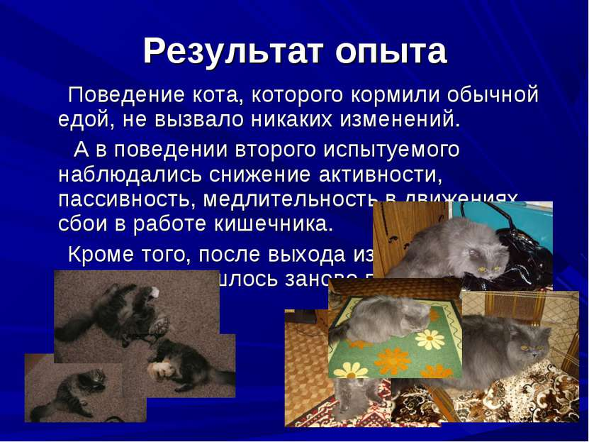 Результат опыта Поведение кота, которого кормили обычной едой, не вызвало ник...