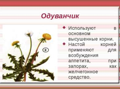 Одуванчик Используют в основном высушенные корни. Настой корней применяют для...