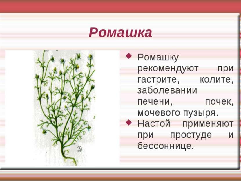 Ромашка Ромашку рекомендуют при гастрите, колите, заболевании печени, почек, ...