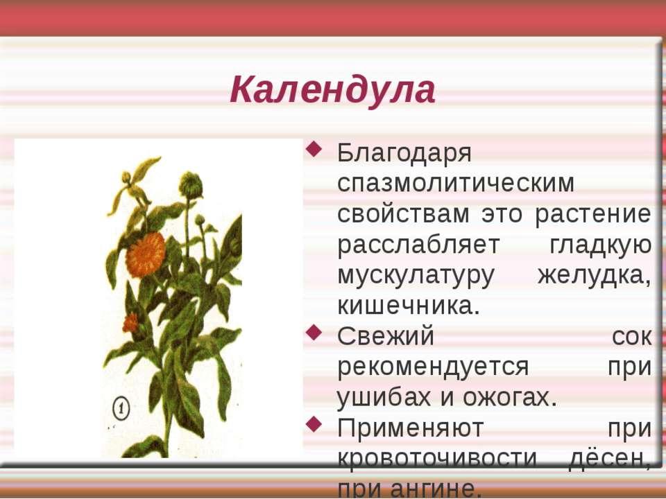Календула Благодаря спазмолитическим свойствам это растение расслабляет гладк...