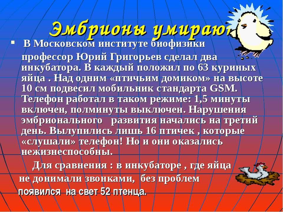 Эмбрионы умирают В Московском институте биофизики профессор Юрий Григорьев сд...