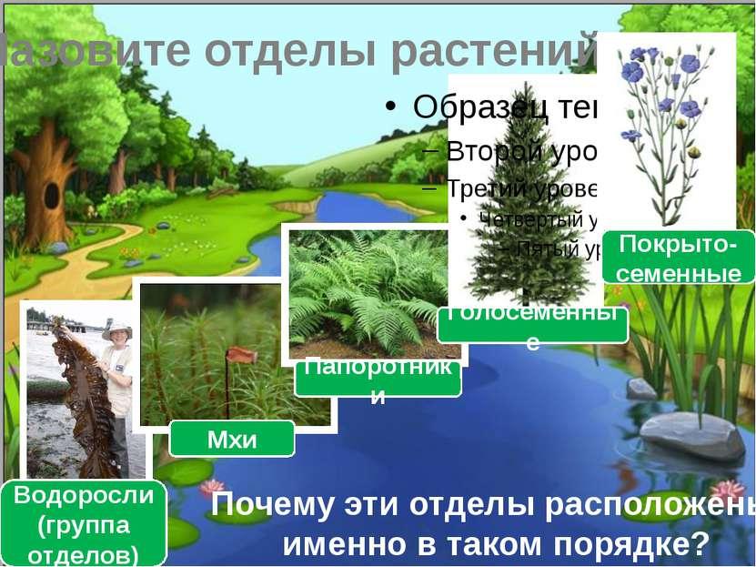 Назовите отделы растений Водоросли (группа отделов) Мхи Папоротники Голосемен...