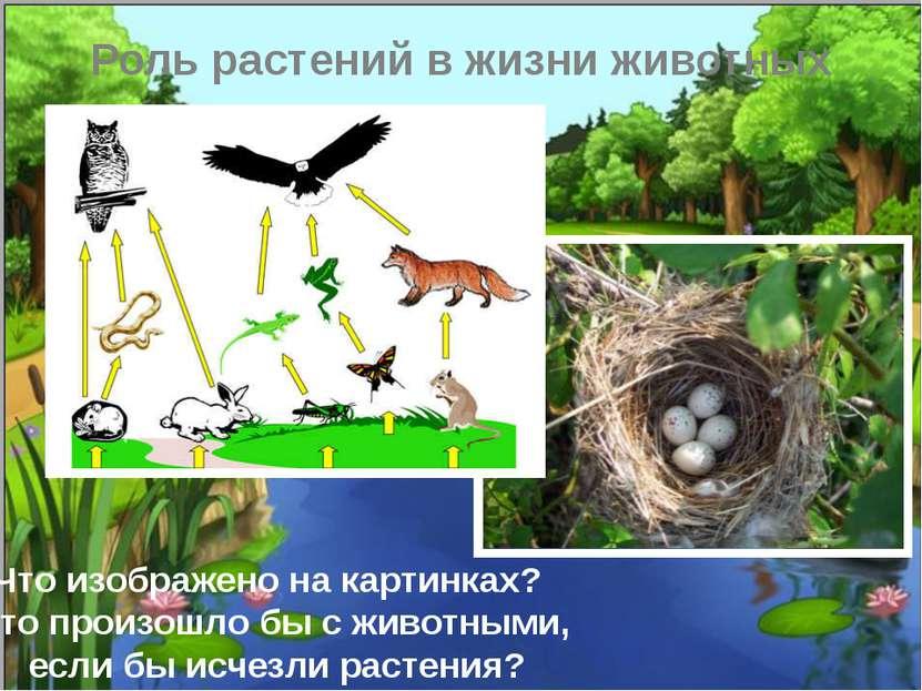 Роль растений в жизни животных Что изображено на картинках? Что произошло бы ...