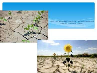 Засуха – это длительная сухая погода с высокой температурой воздуха и отсутст...