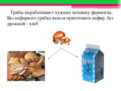 Грибы вырабатывают нужные человеку ферменты. Без кефирного грибка нельзя приг...