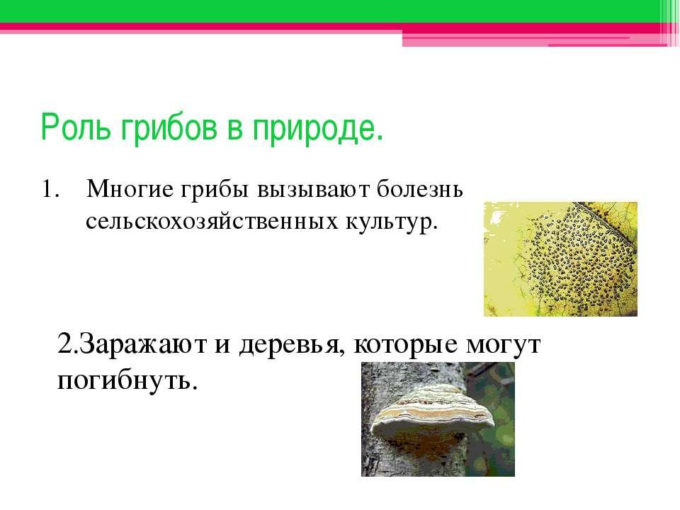 Роль грибов в природе. 1. Многие грибы вызывают болезнь сельскохозяйственных ...