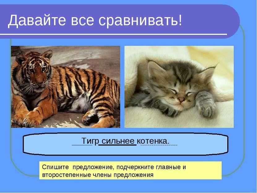 Давайте все сравнивать! Тигр сильнее котенка. Спишите предложение, подчеркнит...