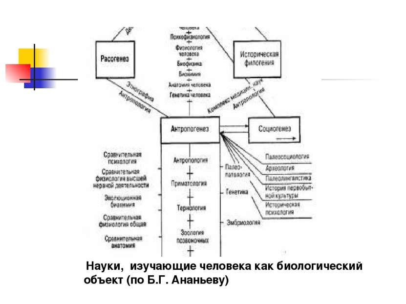 Науки, изучающие человека как биологический объект (по Б.Г. Ананьеву)
