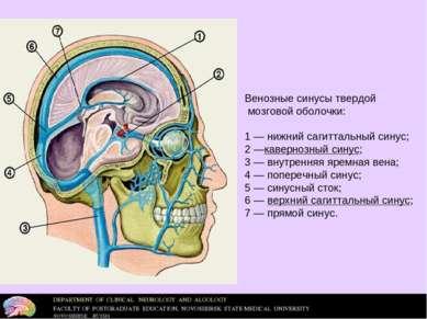 Венозные синусы твердой мозговой оболочки: 1— нижний сагиттальный синус; 2—...