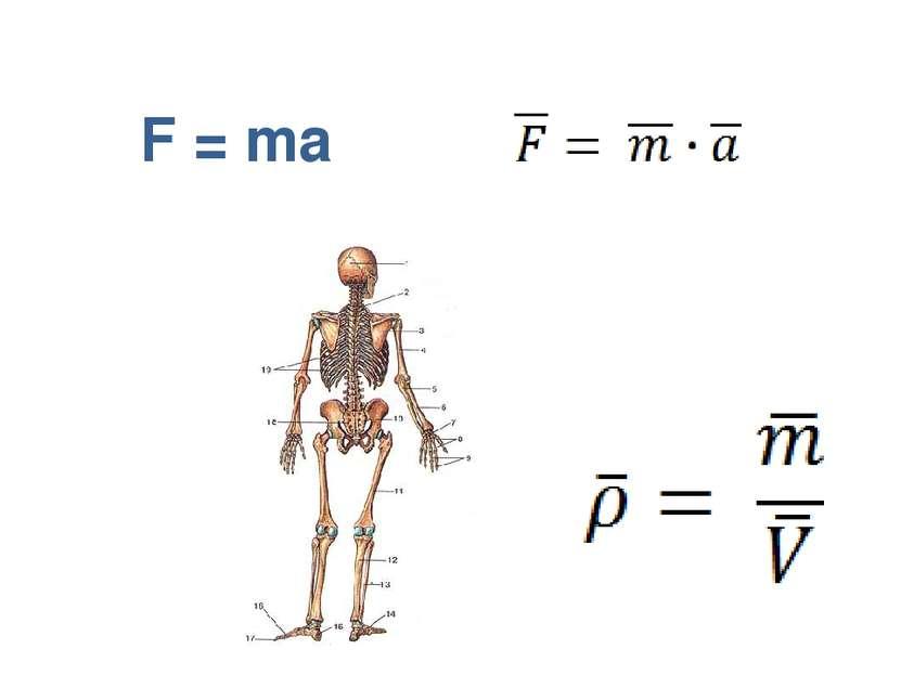F = ma
