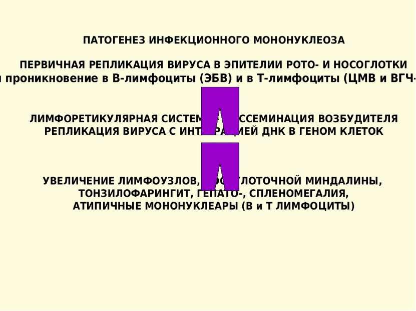 ПАТОГЕНЕЗ ИНФЕКЦИОННОГО МОНОНУКЛЕОЗА ПЕРВИЧНАЯ РЕПЛИКАЦИЯ ВИРУСА В ЭПИТЕЛИИ Р...