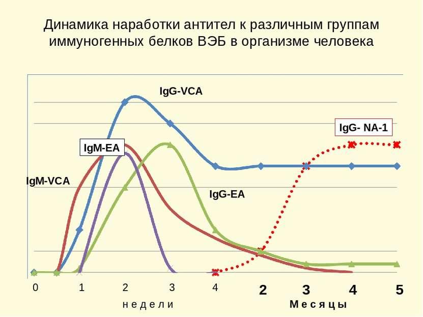 Динамика наработки антител к различным группам иммуногенных белков ВЭБ в орга...