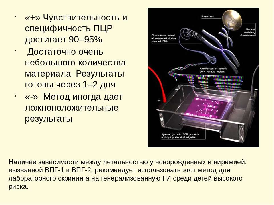 «+» Чувствительность и специфичность ПЦР достигает 90–95% Достаточно очень не...