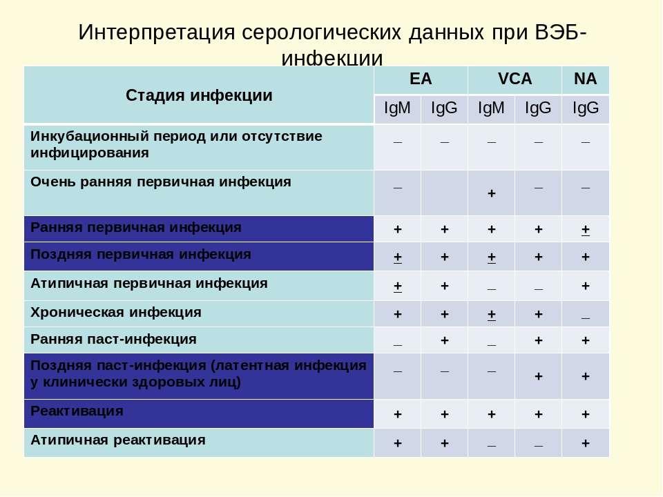 Интерпретация серологических данных при ВЭБ-инфекции Стадия инфекции EA VCA N...