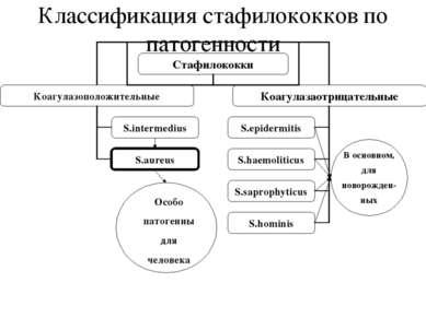 Классификация стафилококков по патогенности Особо патогенны для человека В ос...