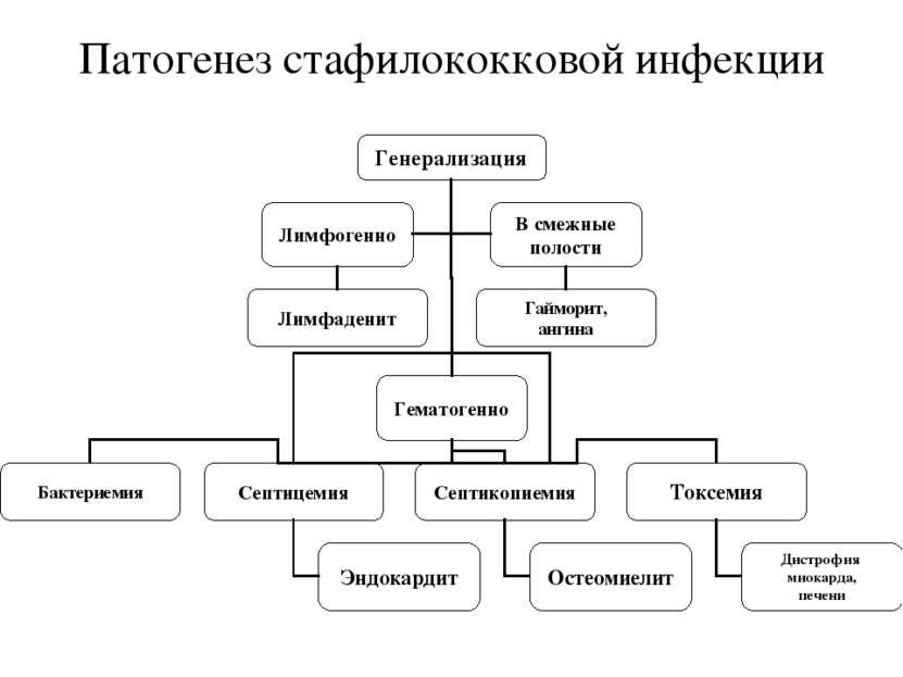 Патогенез стафилококковой инфекции