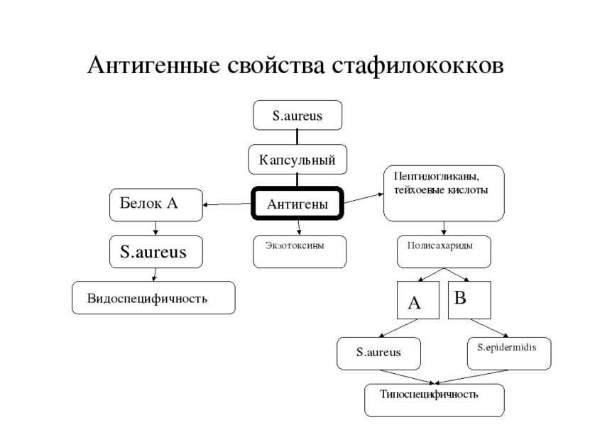 Антигенные свойства стафилококков S.aureus S.epidermidis Экзотоксины Типоспец...