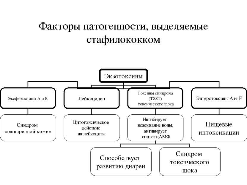 Факторы патогенности, выделяемые стафилококком