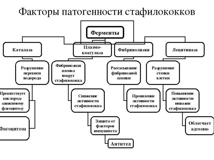 Факторы патогенности стафилококков