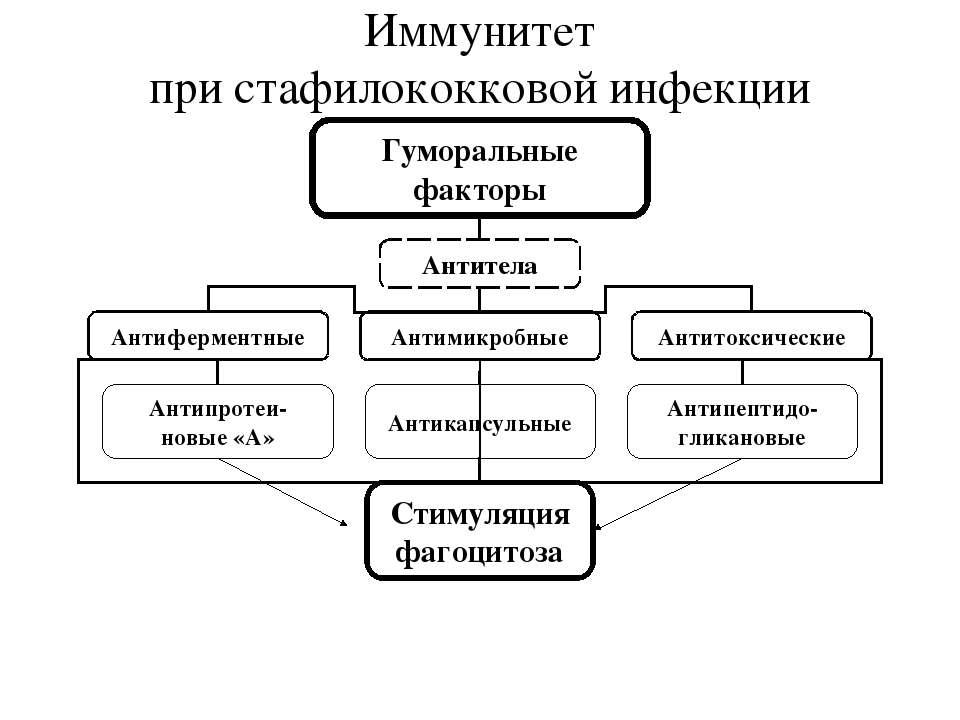 Иммунитет при стафилококковой инфекции