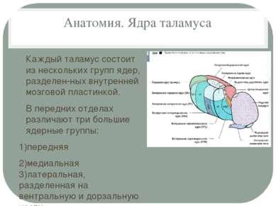 Анатомия. Ядра таламуса Каждый таламус состоит из нескольких групп ядер, разд...
