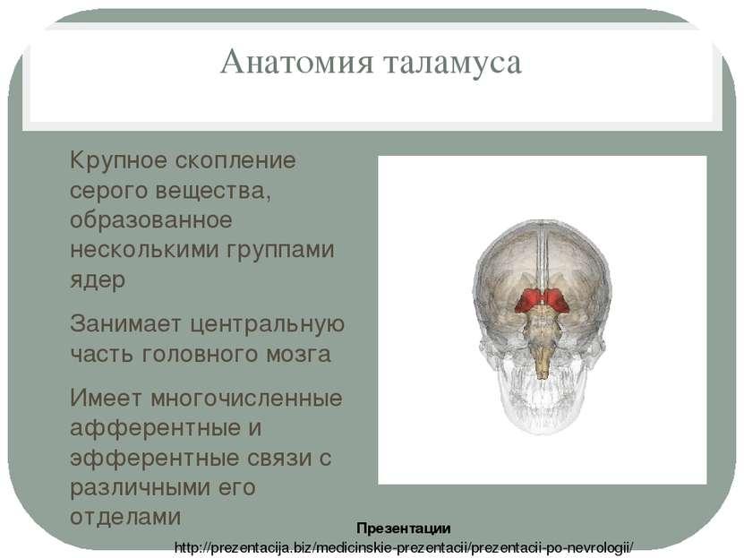 Анатомия таламуса Крупное скопление серого вещества, образованное несколькими...