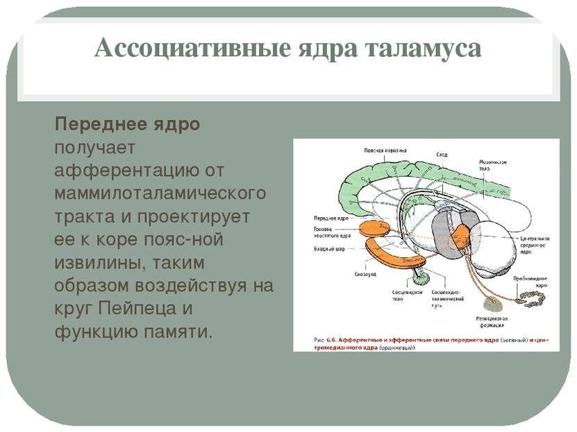 Ассоциативные ядра таламуса Переднее ядро получает афферентацию от маммилотал...