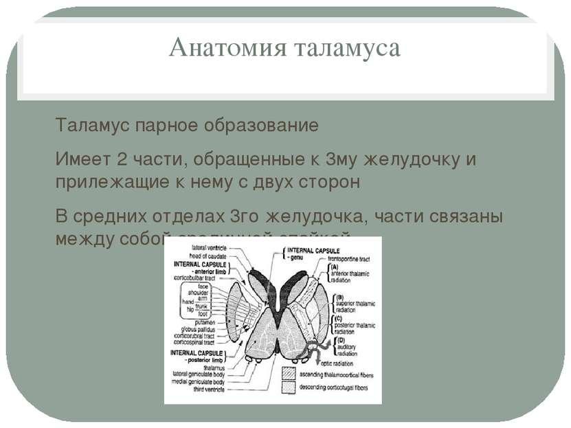 Анатомия таламуса Таламус парное образование Имеет 2 части, обращенные к 3му ...