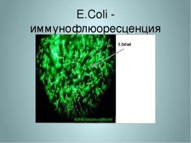 E.Coli - иммунофлюоресценция
