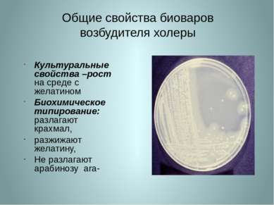 Общие свойства биоваров возбудителя холеры Культуральные свойства –рост на ср...