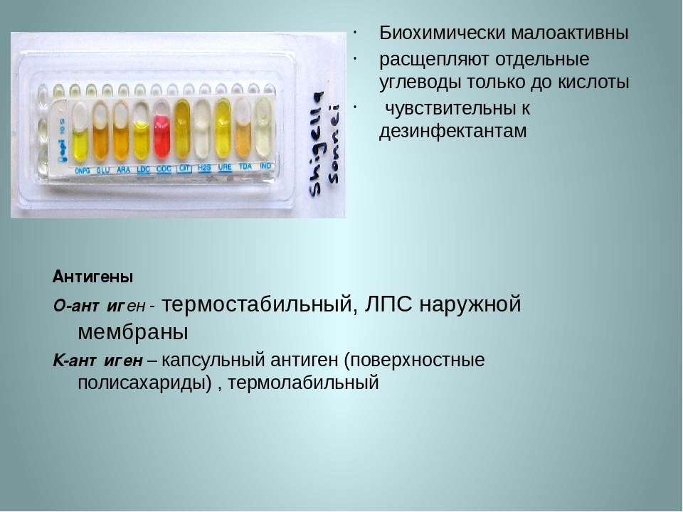 Антигены О-антиген - термостабильный, ЛПС наружной мембраны К-антиген – капсу...