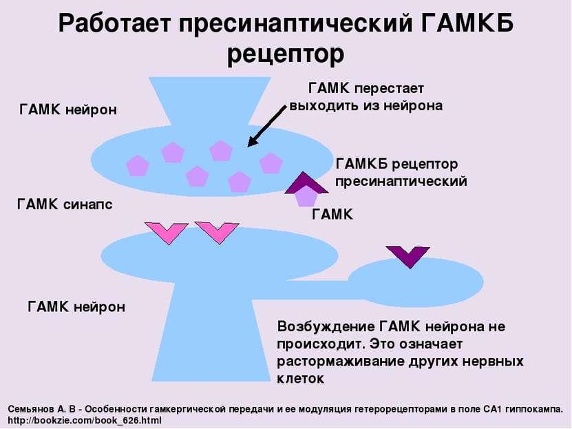 ГАМК нейрон Работает пресинаптический ГАМКБ рецептор ГАМК синапс ГАМК нейрон ...