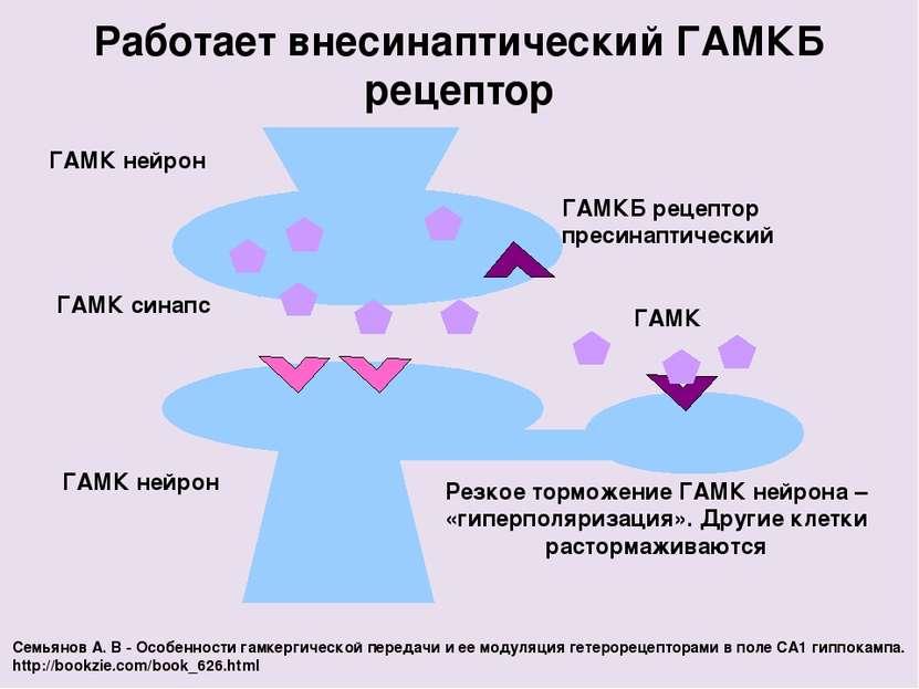 Работает внесинаптический ГАМКБ рецептор ГАМК нейрон ГАМКБ рецептор пресинапт...