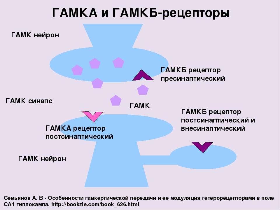 ГАМК нейрон ГАМКА и ГАМКБ-рецепторы ГАМК синапс ГАМК нейрон ГАМКБ рецептор пр...