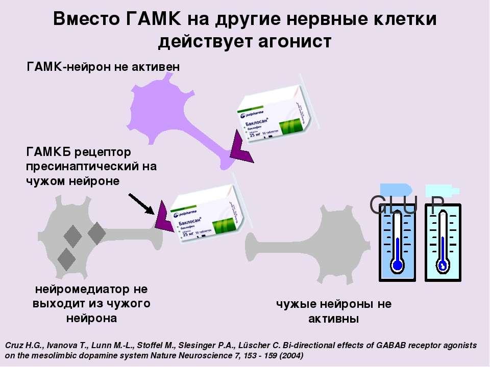 Вместо ГАМК на другие нервные клетки действует агонист Cruz H.G., Ivanova T.,...