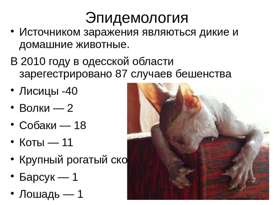 Эпидемология Источником заражения являються дикие и домашние животные. В 2010...