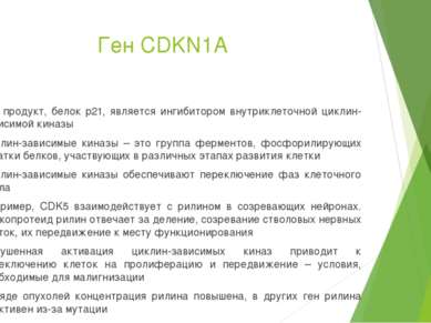 Ген CDKN1A Его продукт, белок p21, является ингибитором внутриклеточной цикли...