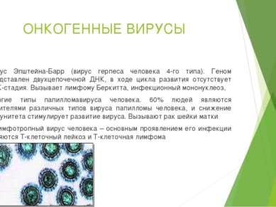 ОНКОГЕННЫЕ ВИРУСЫ Вирус Эпштейна-Барр (вирус герпеса человека 4-го типа). Ген...